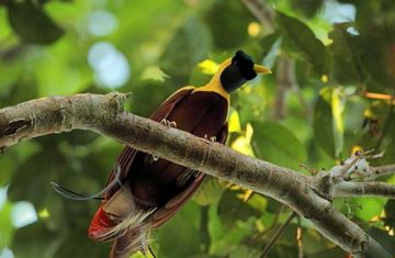 birding tour - Raja Ampat Tour Packages, YOEXPLORE