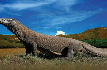 Komodo Islands Tour 3D2N