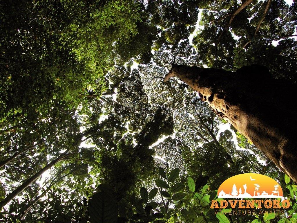 FRIM Treetops - Kuala Lumpur Rainforest Tour - Explore Asia, YOEXPLORE