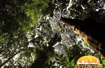 FRIM Kuala Lumpur Rainforest Tour - Explore Asia, YOEXPLORE