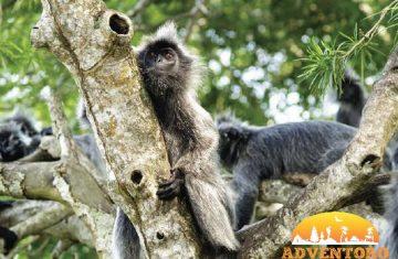 kuala selangor river cruise - Explore Asia, YOEXPLORE