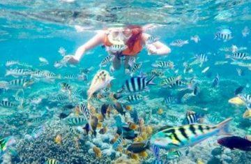 half day snorkeling trip nusa penida - YOEXPLORE