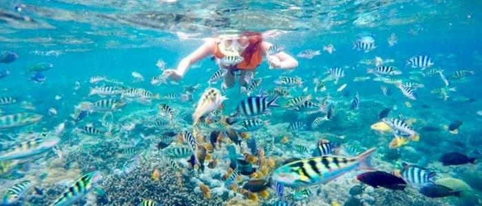 half day snorkeling trip nusa penida- Yoexplore