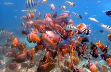 Gili Island Snorkeling - YOEXPLORE