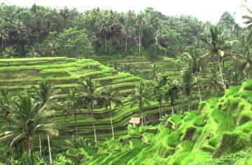 Paket Honeymoon Bali 3 hari 2 malam - YOEXPLORE