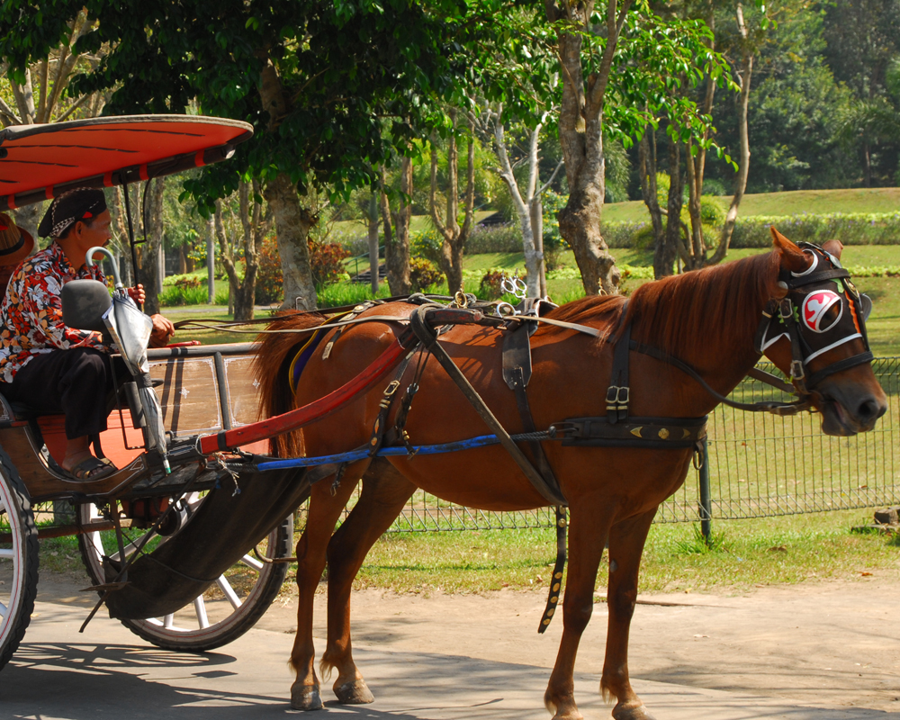 Andong Candi Borobudur - yoexplore