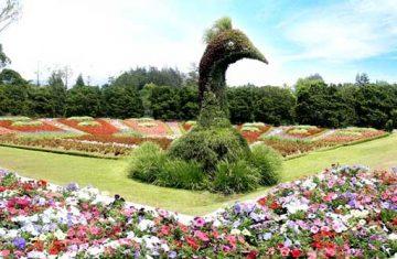 Explore Indonesia - Flower Garden Cianjur Puncak, Bogor