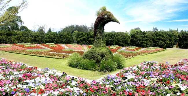 nusantara_flower_garden