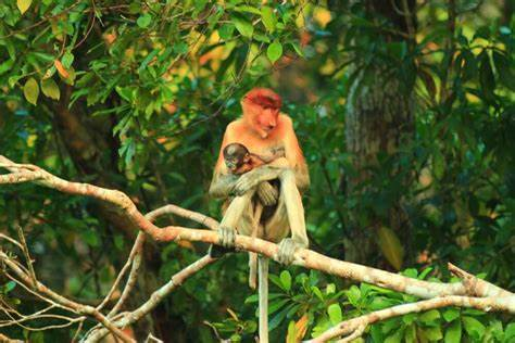 yoexplore-mama-and-kid-kalimantan