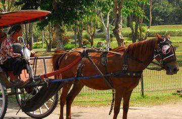 Borobudur Andong Tour
