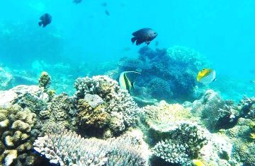 Snorkeling in Lembongan Island Bali