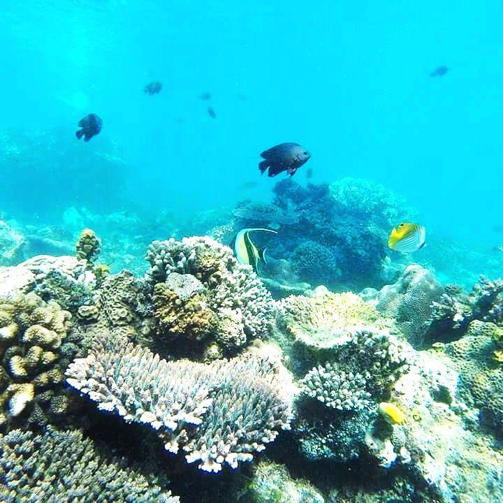 Yoexplore_Family Trips_Snorkeling in Lembongan Island Bali