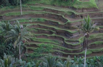 Bali Kintamani Ubud Full Day Tour