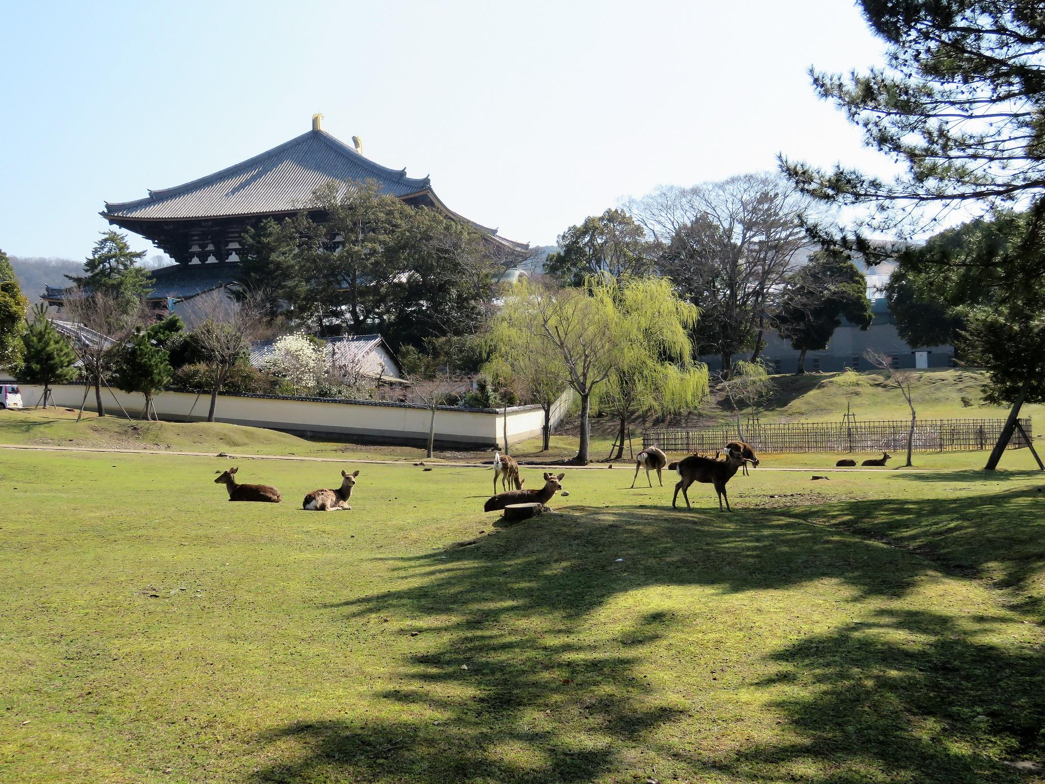 Nara-Park2